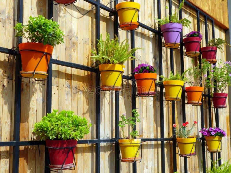 Potenciômetros de flor coloridos na parede de madeira fotografia de stock