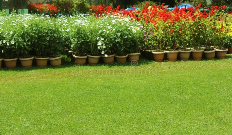 Potenciômetros do flowersin do jardim fotografia de stock