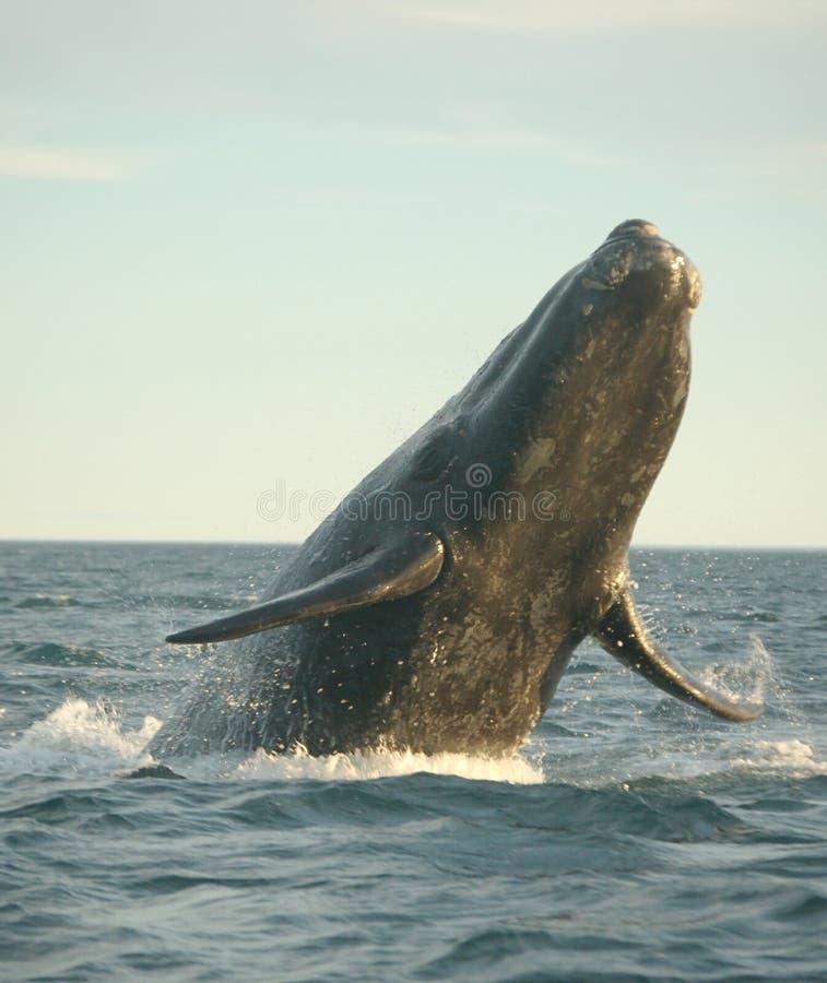 Potencia de la ballena imagen de archivo libre de regalías
