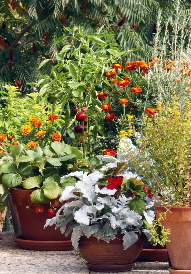 Potenziometer und Behälter, die auf der Terrasse oder dem balc im Garten arbeiten lizenzfreies stockfoto
