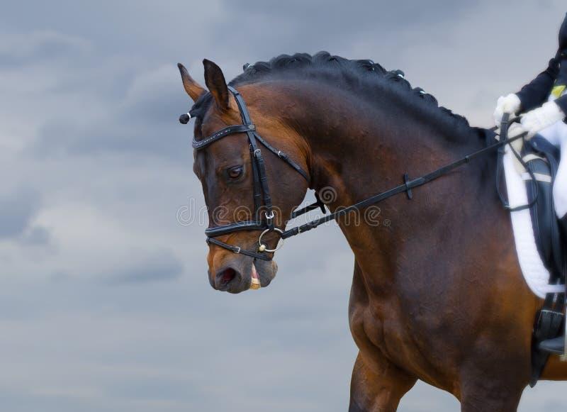 Download Potere di cavallo fotografia stock. Immagine di grande - 56891122