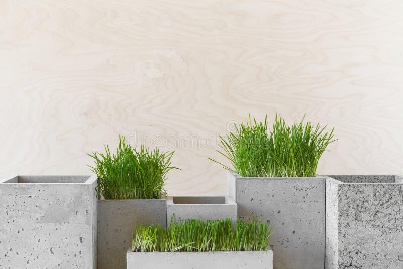 Potes concretos con la hierba imagen de archivo libre de regalías