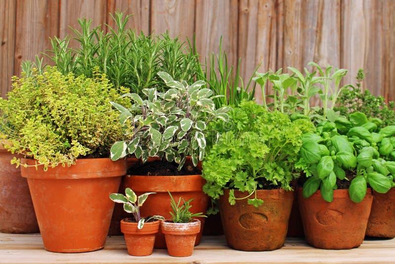 Potes de arcilla con las hierbas en jardín imágenes de archivo libres de regalías