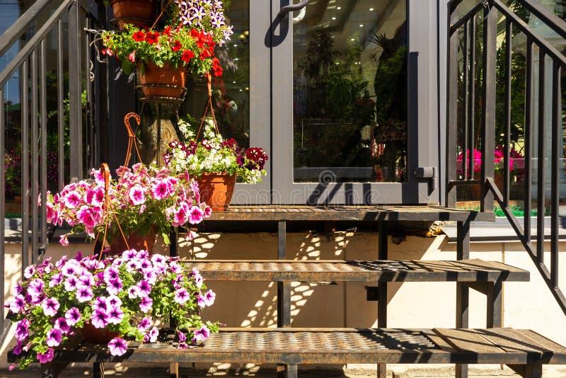 Potes de flores en los pasos de la tienda imagen de archivo libre de regalías