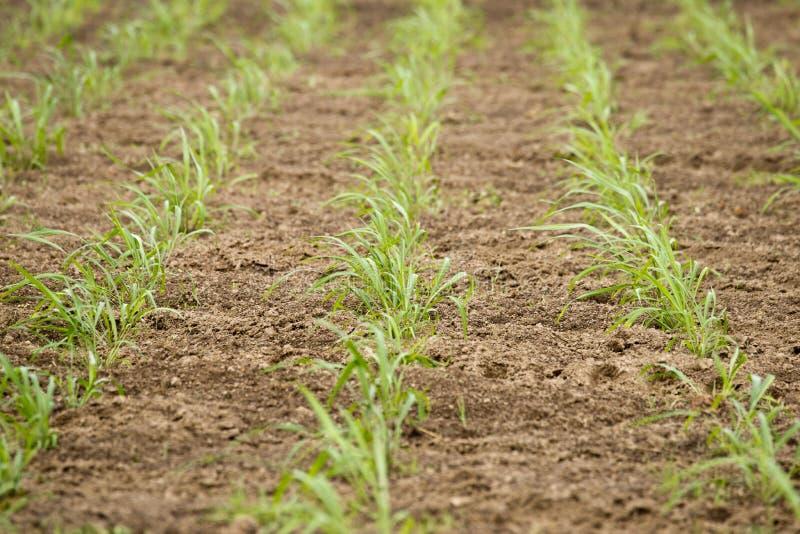 Poti l'agricoltura. immagine stock