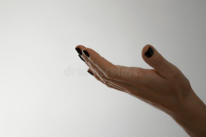 poti la vista di chiedere/che dà della mano della donna il gesto su fondo bianco fotografia stock libera da diritti