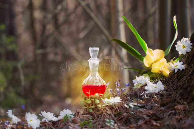 Potion magique en bouteille dans la forêt de fées images stock