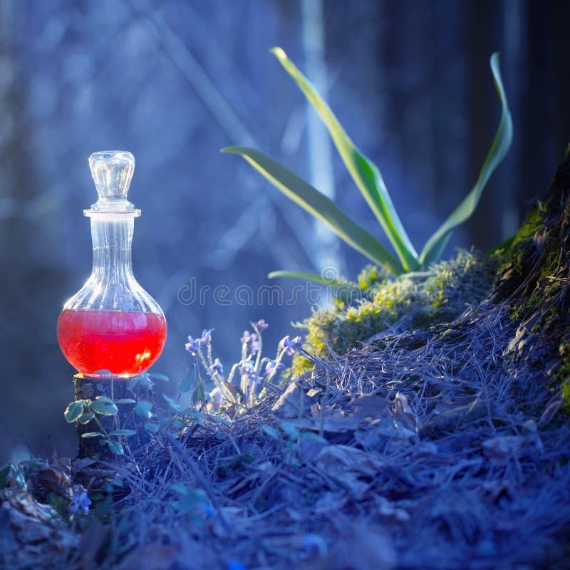Potion magique en bouteille dans la forêt de fées images libres de droits