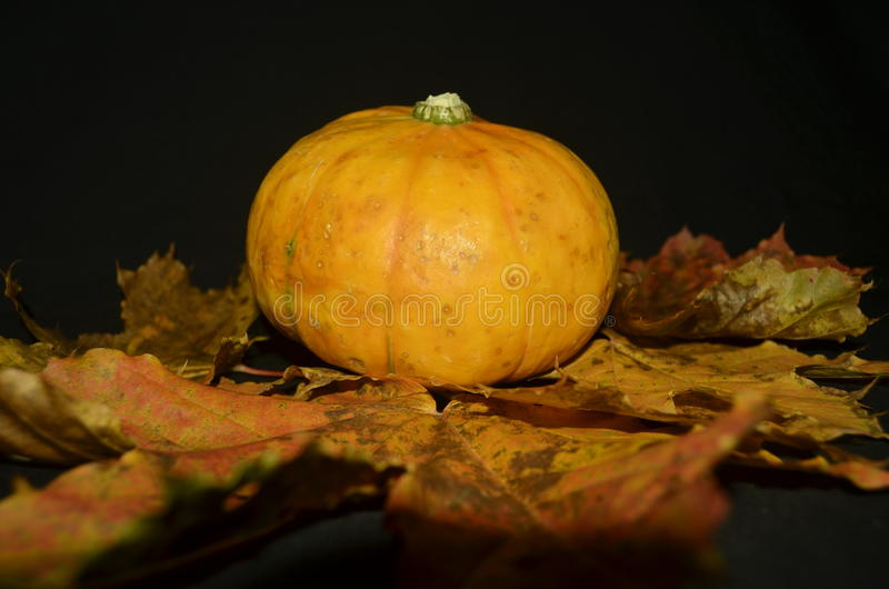 Download Potiron image stock. Image du halloween, lame, érable - 45350191