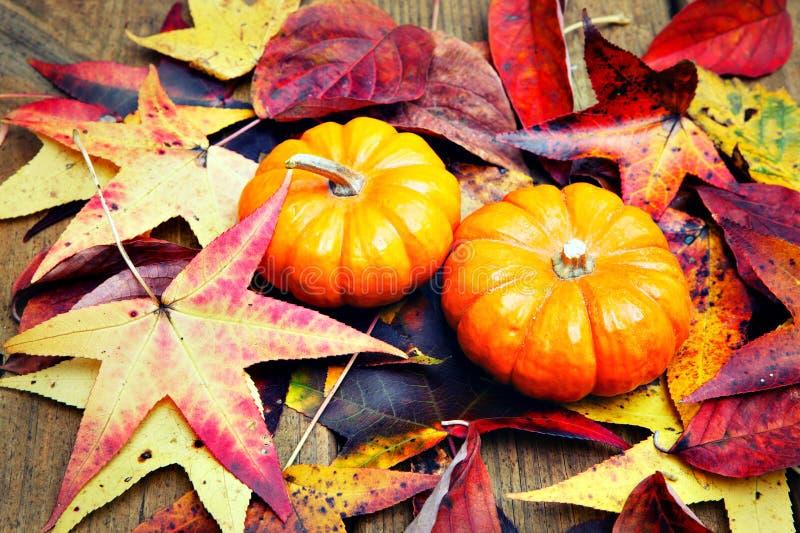 Potiron de Halloween images libres de droits