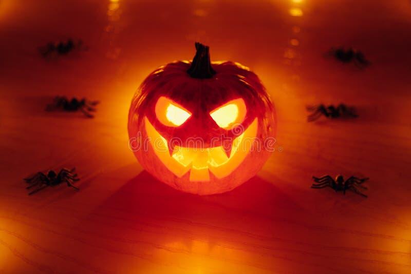 potiron de Jack-o-lanterne avec des araignées, fond de Halloween photographie stock libre de droits
