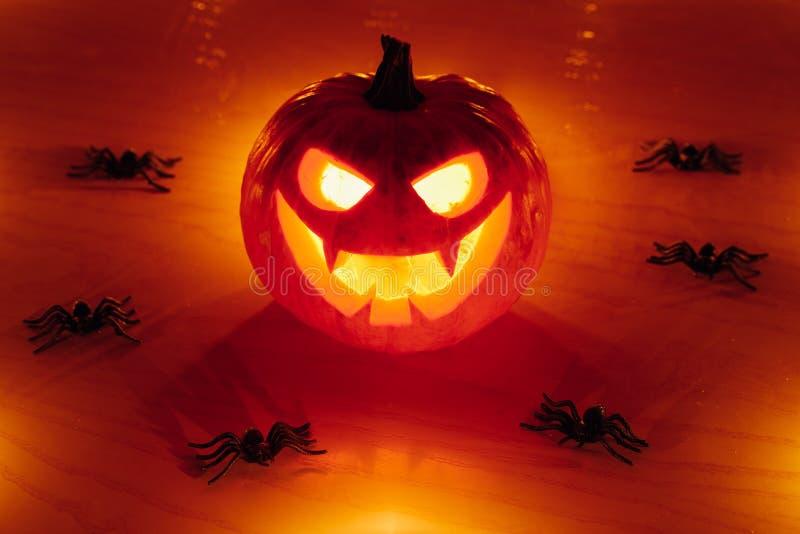 potiron de Jack-o-lanterne avec des araignées, fond de Halloween images libres de droits