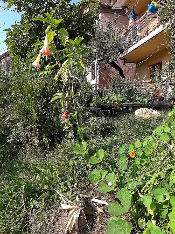 Potiron de mon jardin organique photographie stock libre de droits