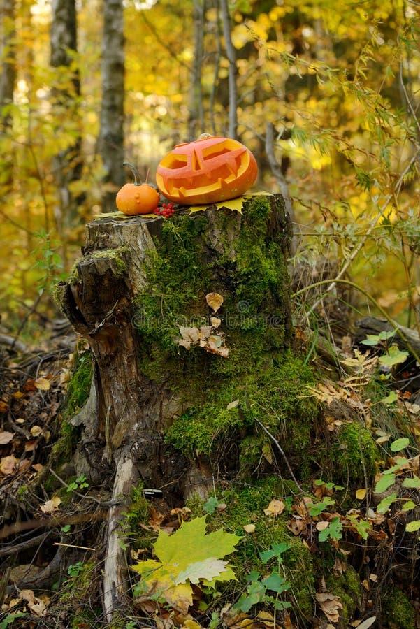 Download Potiron Effrayant De Veille De La Toussaint Dans La Forêt D'automne Image stock - Image du halloween, forêt: 45360003