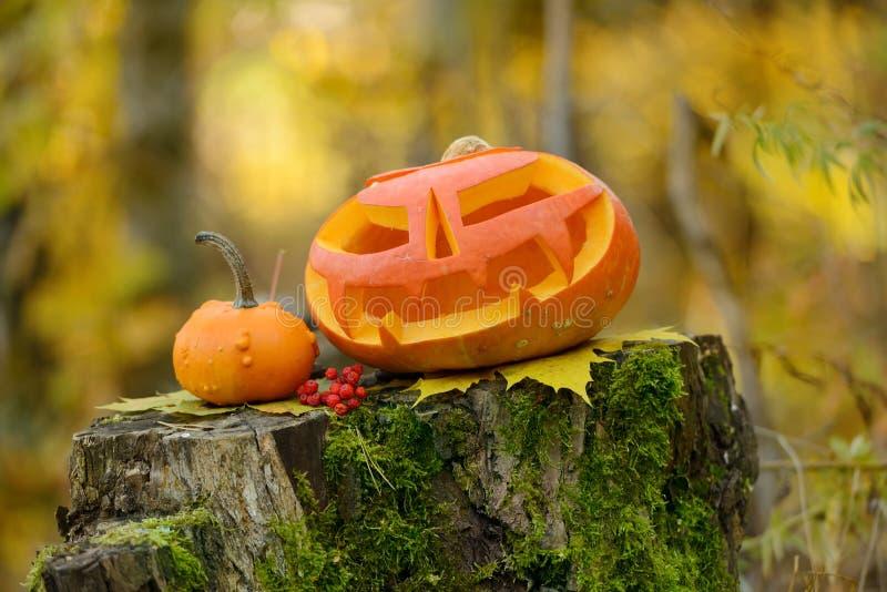 Download Potiron Effrayant De Veille De La Toussaint Dans La Forêt D'automne Photo stock - Image du novembre, magie: 45360124