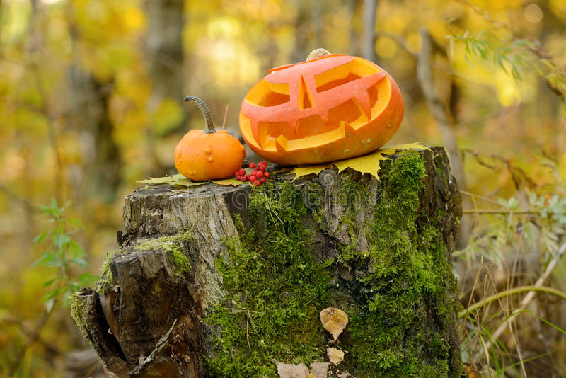 Download Potiron Effrayant De Veille De La Toussaint Dans La Forêt D'automne Photo stock - Image du halloween, lumière: 45360620
