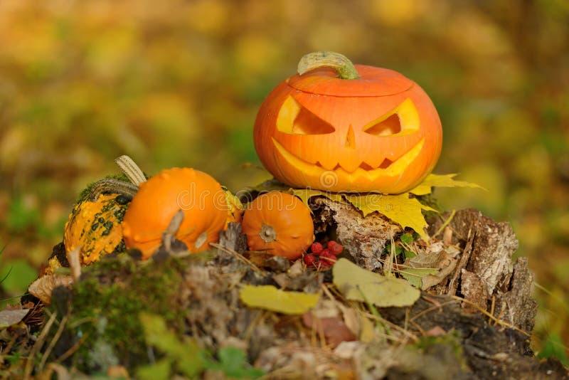 Download Potiron Effrayant De Veille De La Toussaint Dans La Forêt D'automne Image stock - Image du rampant, halloween: 45360883