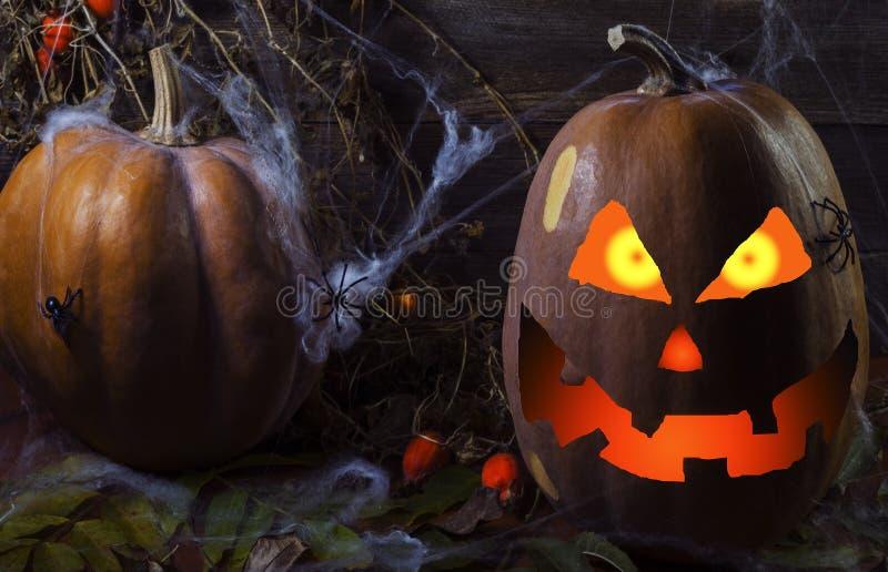 Potiron en Web et araignées sur le fond de l'arbre pour Halloween 4 photo libre de droits