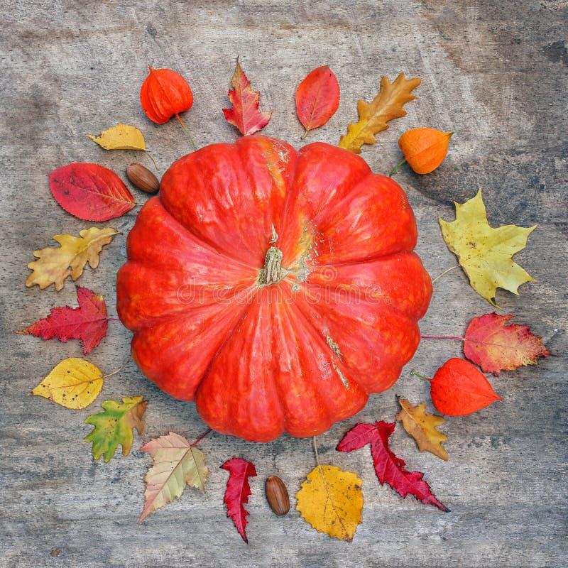 Potiron entouré par des feuilles d'automne Concept de chute catégoriquement squar images stock