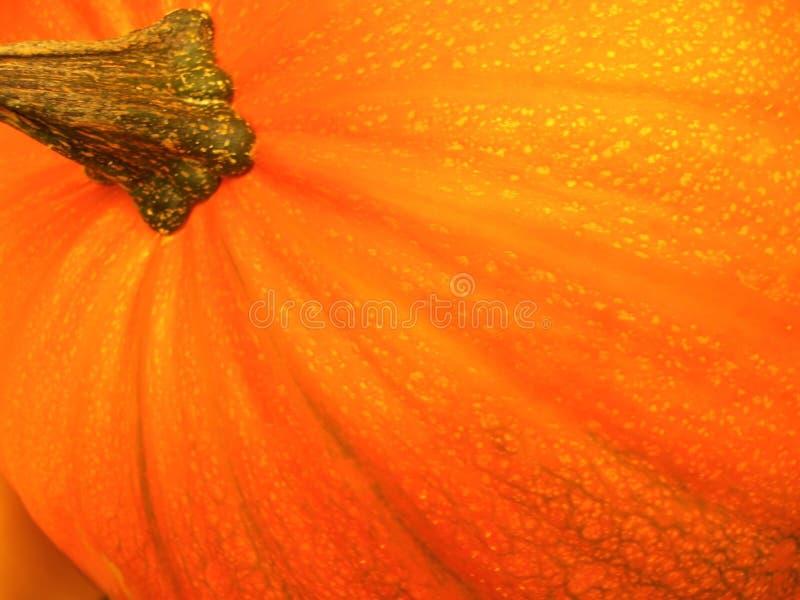 Potiron orange photographie stock