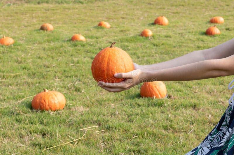 Potiron orange frais dans des mains femelles avec la correction de potirons sur image stock