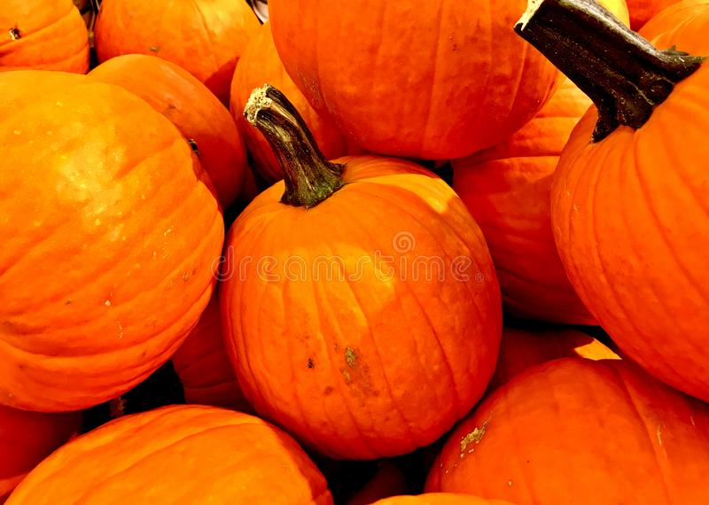 POTIRON, orange, récolte d'automne, thanksgiving, taille moyenne image stock