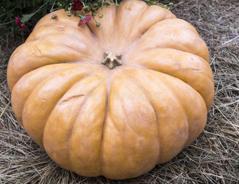 Potiron sur le foin ou la paille légumes saisonniers, automne photo stock