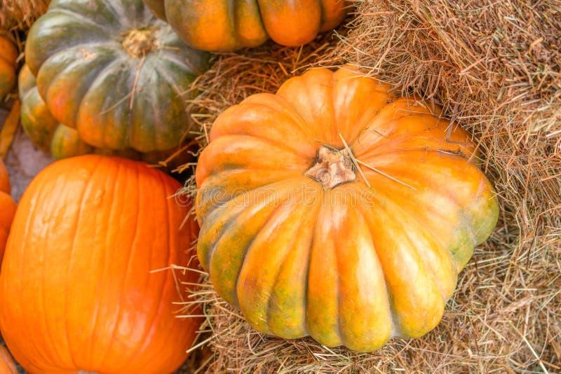 Potiron sur le foin pendant la saison d'automne photo libre de droits