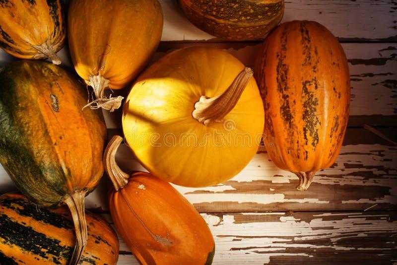 Potiron, thanksgiving, fond, automne, l'espace de copie, vue supérieure photographie stock libre de droits