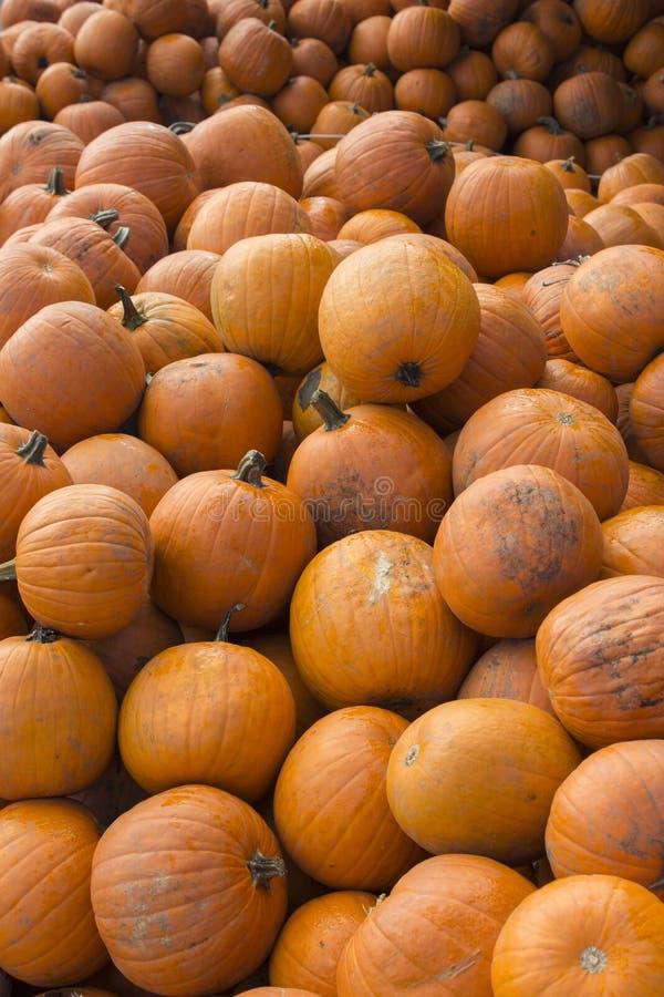 Potirons à une vente de Halloween photographie stock libre de droits