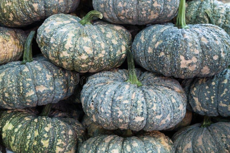 Download Potirons image stock. Image du saisonnier, sorts, agricole - 56486211