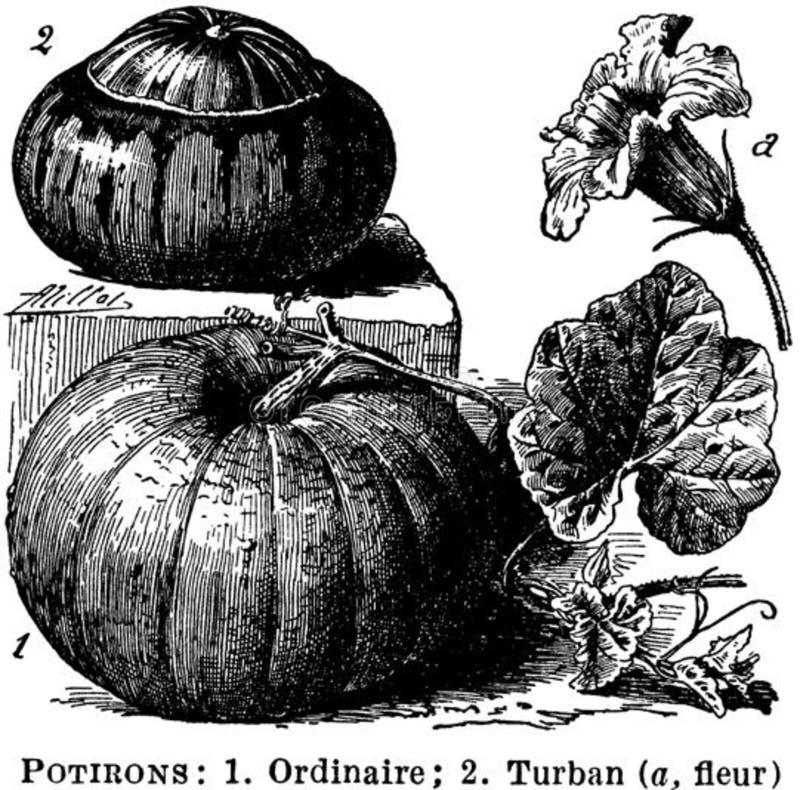 Potirons Free Public Domain Cc0 Image