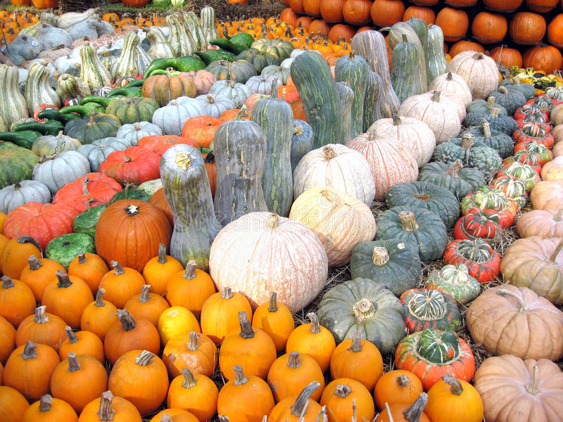 Potirons, courges et sirops images stock