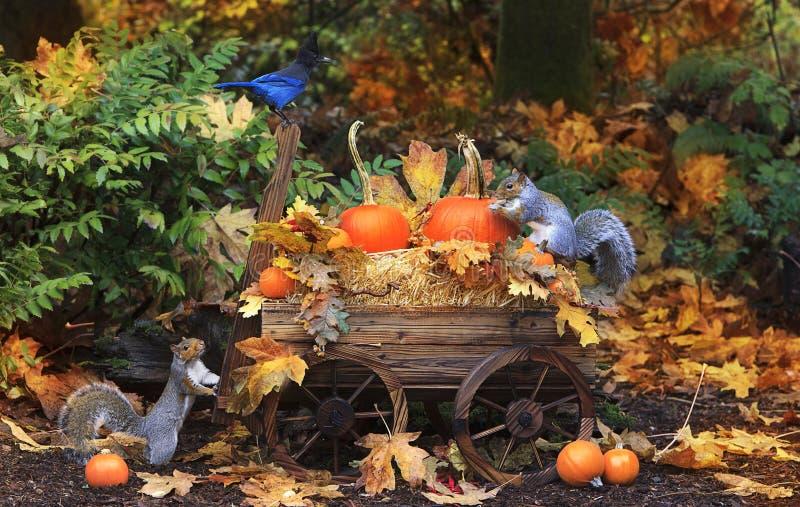 Potirons de chute dans le chariot avec Grey Squirrels et le geai