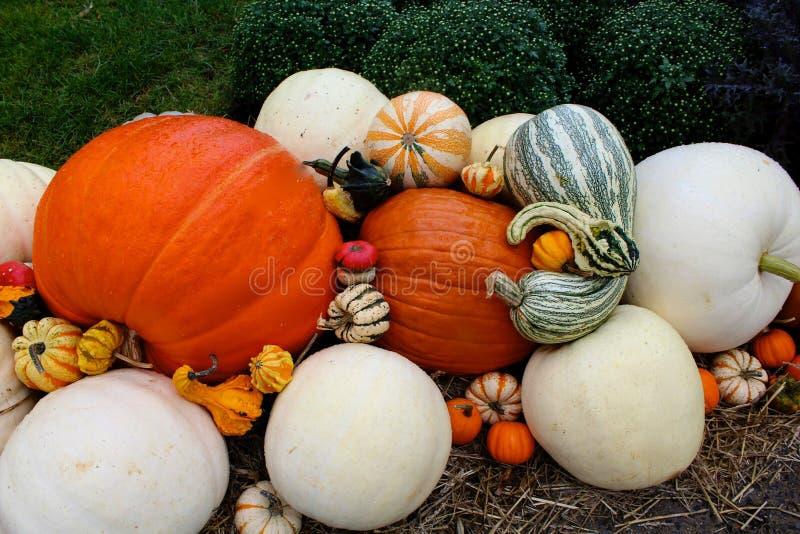 Download Potirons de courges photo stock. Image du automne, saison - 45364182
