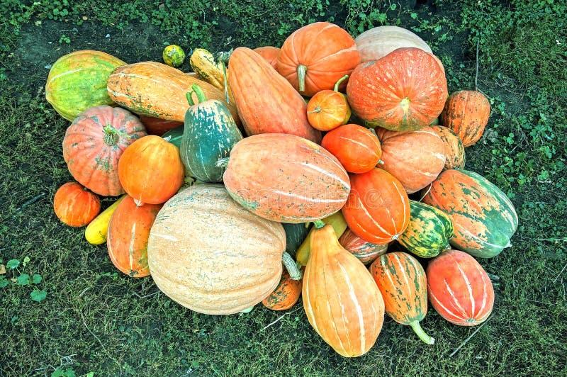 Potirons de Differents pour Halloween ou Thanksgiving photo libre de droits