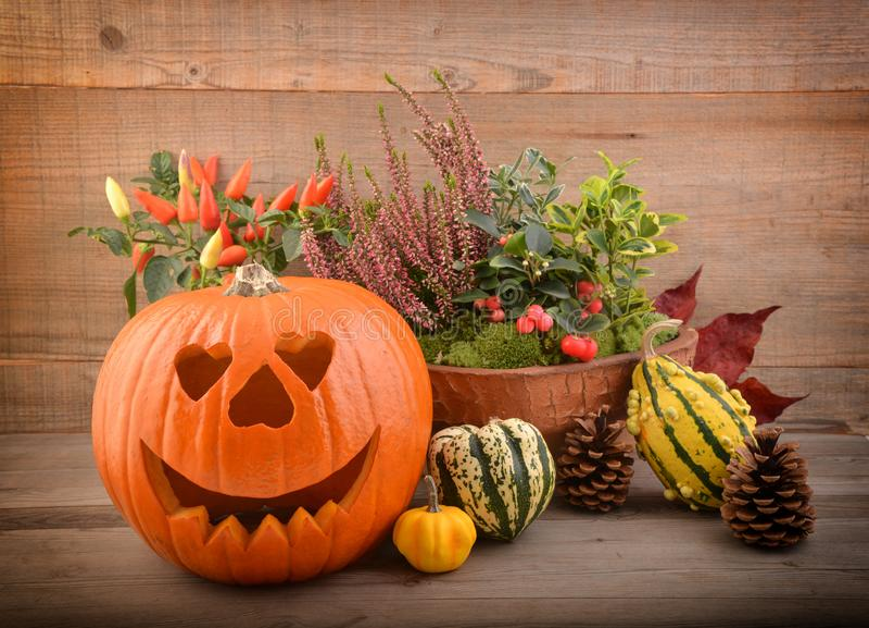 Potirons de Halloween, avec des fleurs photos stock