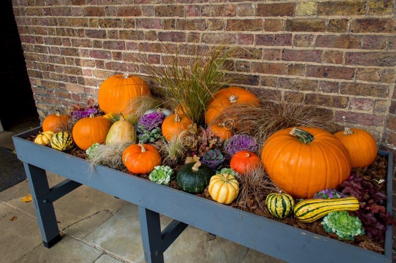 Potirons de Halloween sur l'affichage photographie stock libre de droits