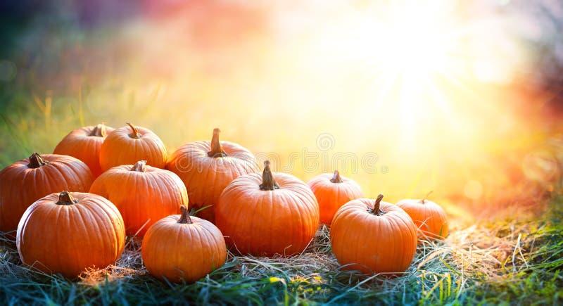 Potirons en The Field au coucher du soleil - thanksgiving image stock