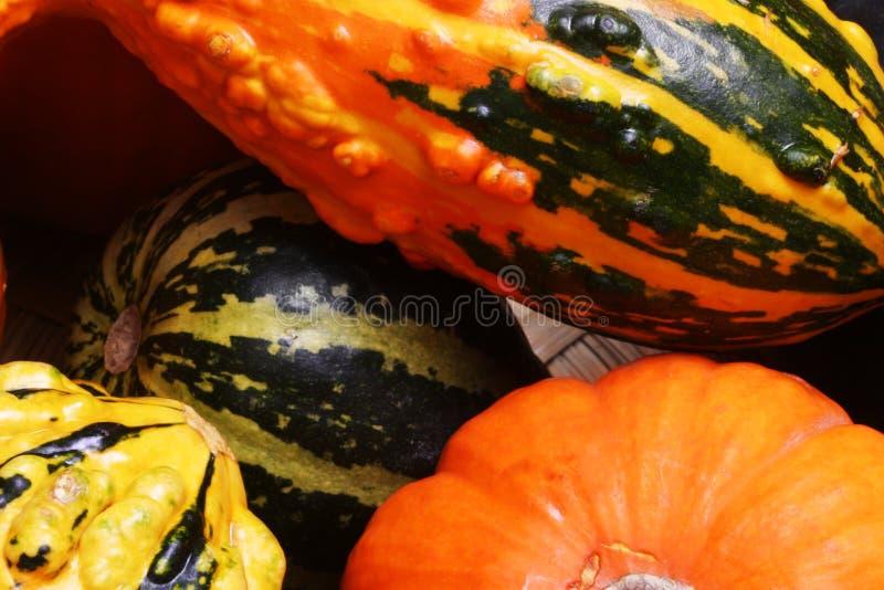 Potirons et courge #3 d'automne photos stock