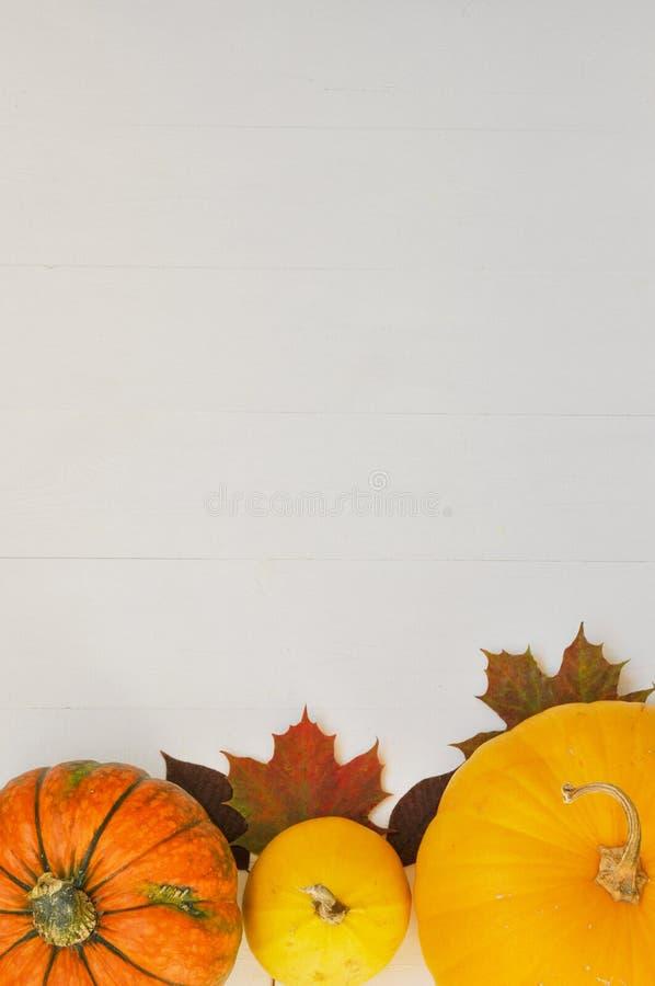 Potirons et feuilles d'automne jaunes et oranges sur le fond en bois blanc pour la chute de récolte et le thème de thanksgiving photo libre de droits