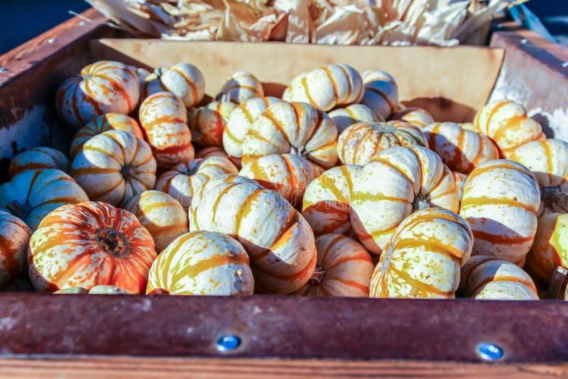Potirons miniatures colorés à vendre à une correction de potiron de Halloween photo stock