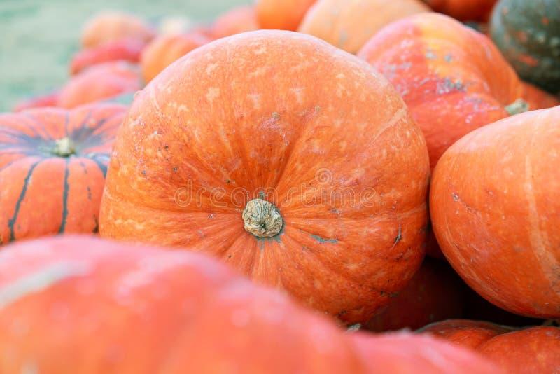 Potirons oranges au marché extérieur d'agriculteur Correction de potiron image libre de droits
