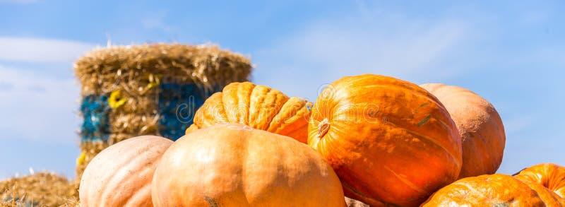 Potirons oranges au marché extérieur d'agriculteur sur la paille images stock