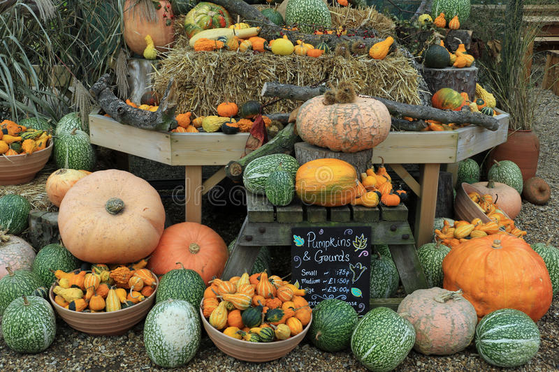 Potirons, sirops et courges photo stock