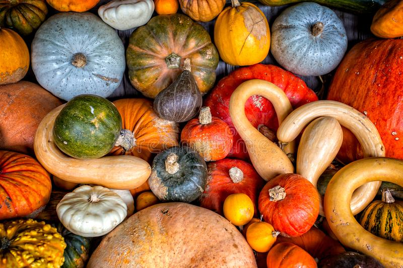 Potirons, sirops et courges assortis photographie stock
