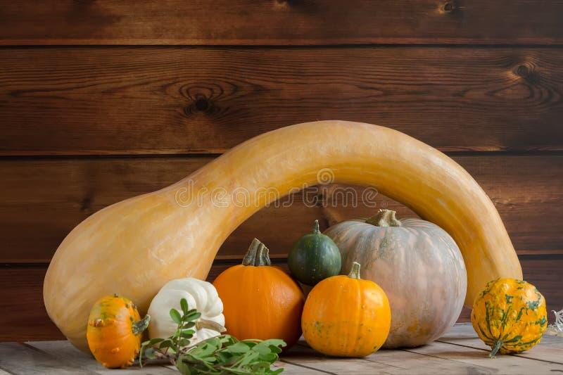 Potirons sur le fond en bois, l'espace de copie pour le texte Jour de Halloween, de thanksgiving ou automnal saisonnier horizonta photos libres de droits