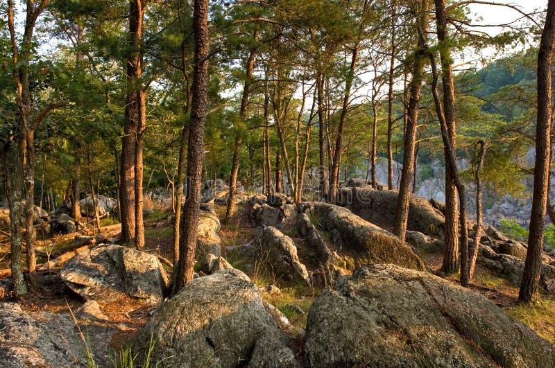 Potomac hout stock fotografie