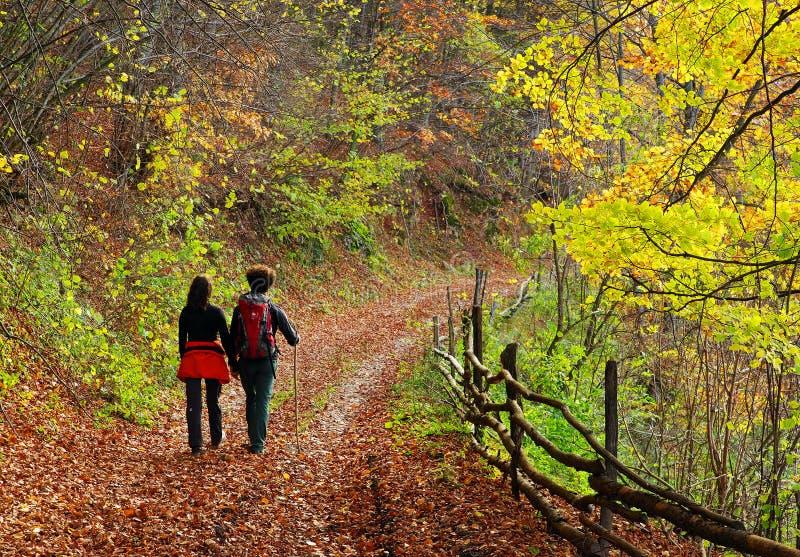 Potomstwa dobierają się odprowadzenie na lasowej ścieżce w jesieni fotografia stock