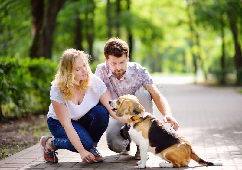 Potomstwa dobierają się z Beagle psem w lato parku zdjęcia stock